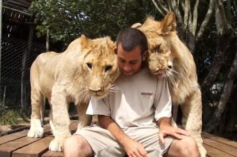 恋するライオン、男性へのスリスリ愛情表現が止まらない