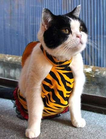節分コスプレ ペット猫