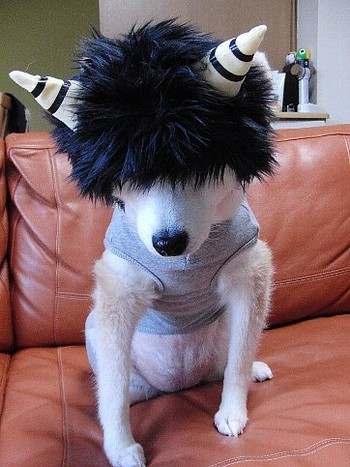 鬼のカツラを付けた節分犬