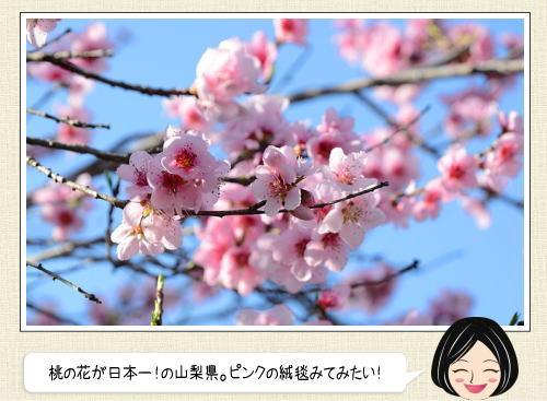 日本で一番早い桃のお花見 山梨県笛吹市でスタート、桃源郷で春に包まれたい!