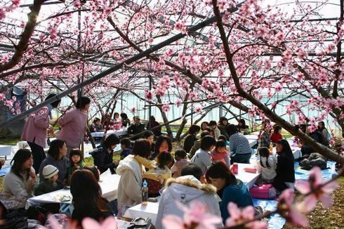 日本一早く桃の花のお花見が楽しめるハウス桃園