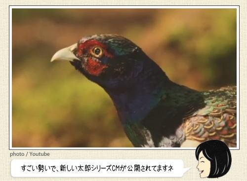au 三太郎CM 絶好調で、新たなストーリー「鬼退治すると人生変わりますねぇ~」