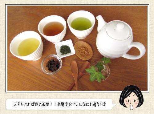 緑茶・ウーロン茶・紅茶は全て同じ茶葉だった!