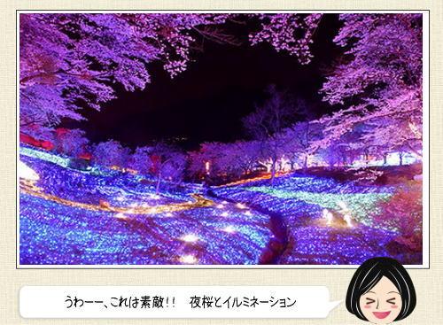 夜桜とイルミネーションの競演が美しい!幻想的な光と香りに包まれる