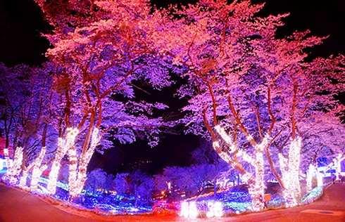 さがみ湖イルミリオン、桜のイルミネーション