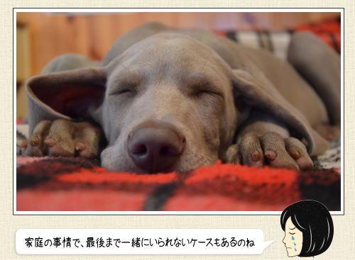 老犬ホーム、犬の介護施設 全国一覧と利用高まる関東・福岡エリア