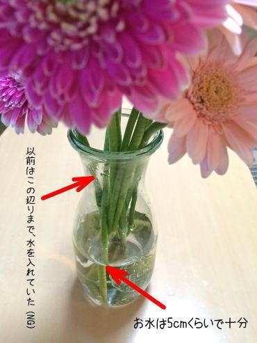 ガーベラなどお花の茎の呼吸を妨げないように、水は5cm程度で