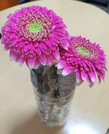 ガーベラの切り花を復活させる