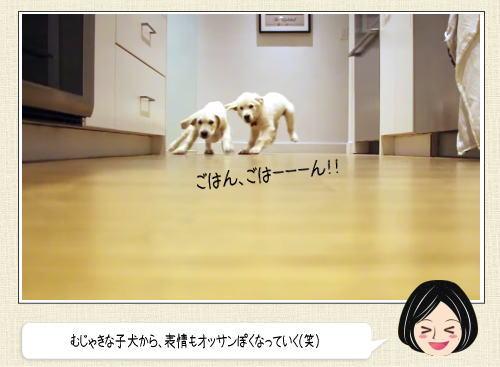 愛犬のごはんダッシュを9か月にわたって撮影したタイムラプス動画が話題