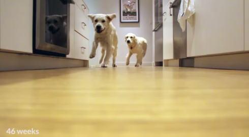 ゴールデンレトリバー タイムラプス動画のキャプチャ5