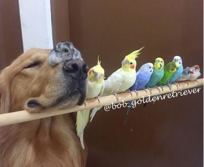 鳥とワンコと時々ハムスター、かわいすぎる一家 写真3