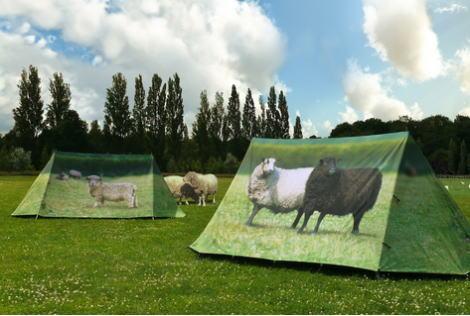 フィールドキャンディーテント 羊たち