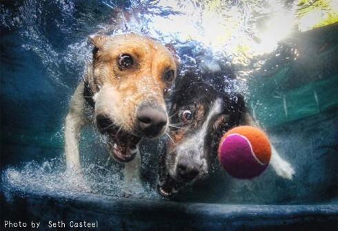水中 犬の写真3
