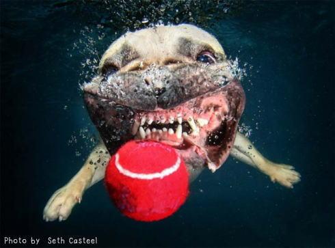 水中 犬の写真4