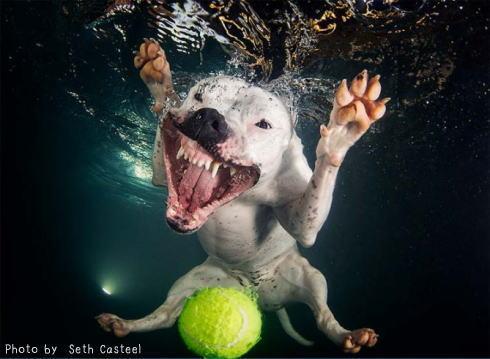 水中 犬の写真5