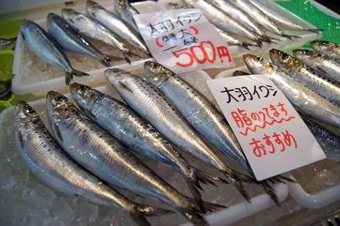 唐戸市場は魚が安い!