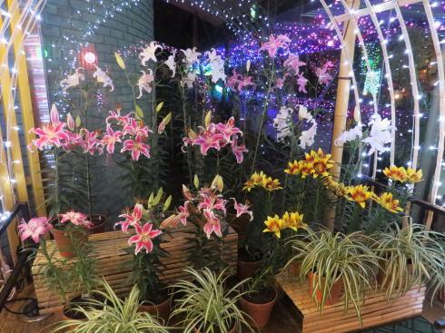 とっとり花回廊 温室にあるユリの花