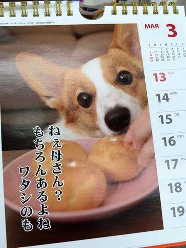 犬川柳カレンダー2016の中身