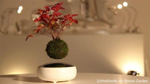 フワフワ空中に浮く盆栽 Air Bonsai(エアーボンサイ)に驚き