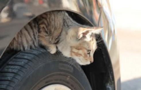 猫バンバン イメージ画像