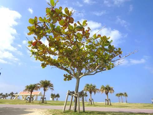 美らSUNビーチ、公園内の様子