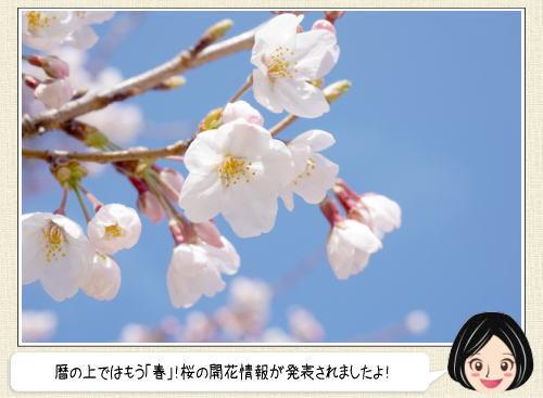 2016 桜前線、九州・四国で開花は遅い見込み