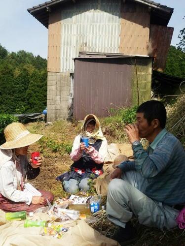 八女茶 新茶の収穫(茶摘み)の様子7