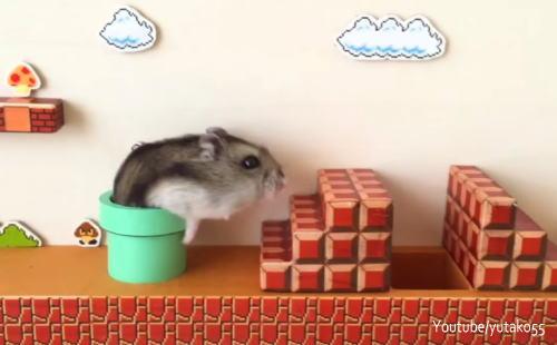 ハムマリオが可愛い!ハムスターがスーパーマリオをリアル体験する動画がキュートすぎ