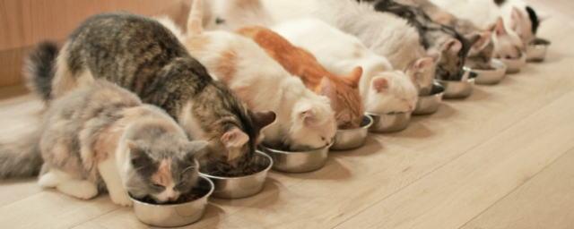 猫カフェ モカ(MoCHA)のごはんタイム