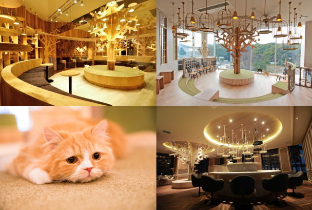 猫カフェMoCHA 各店舗の画像