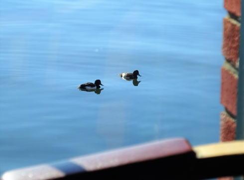 島根県松江市 珈琲館 窓辺から水鳥を見る