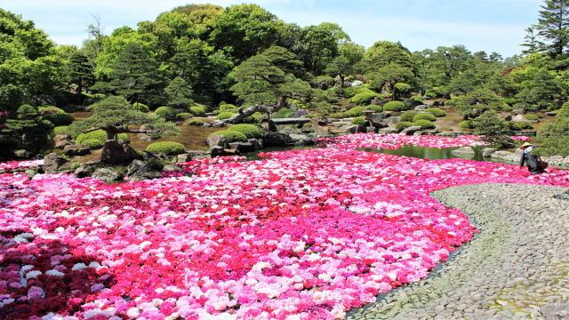 島根 由志園 池泉の牡丹(三万輪の牡丹)