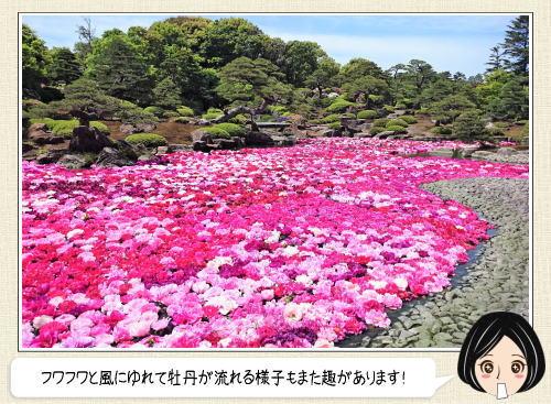 島根 由志園、池を埋め尽くす牡丹に魅せられる圧巻の風景!