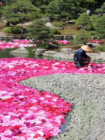 島根 由志園 池泉の牡丹(三万輪の牡丹)3
