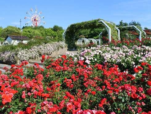 バラ園・蜂ヶ峯総合公園