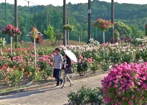 蜂ヶ峯総合公園のバラ園でお散歩デート