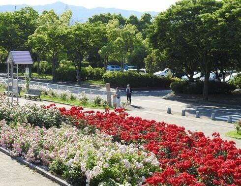 蜂ヶ峯総合公園のバラ園、5月末にはローズフェスタも
