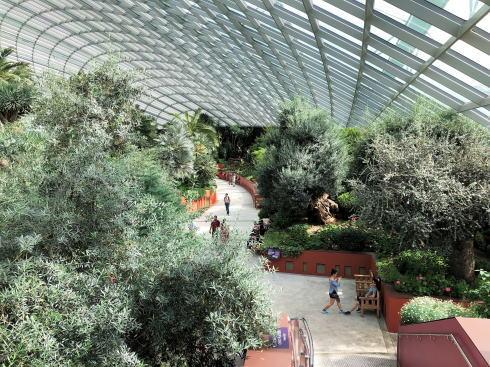 シンガポール ガーデンズバイザベイ フラワードームの中4