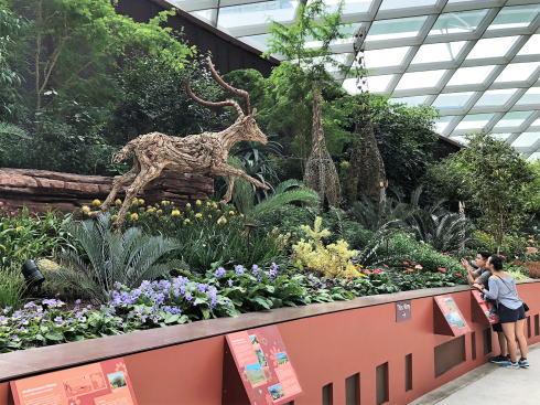 シンガポール ガーデンズバイザベイ フラワードームの中5