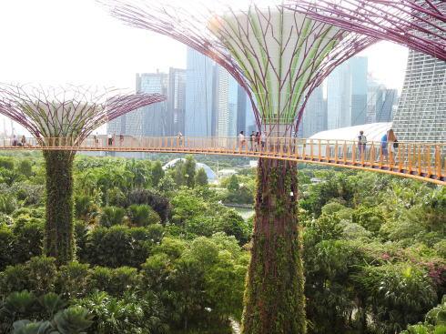 シンガポール ガーデンズバイザベイ スカイウェイ2