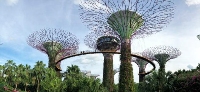 シンガポール ガーデンズバイザベイ スカイウェイ