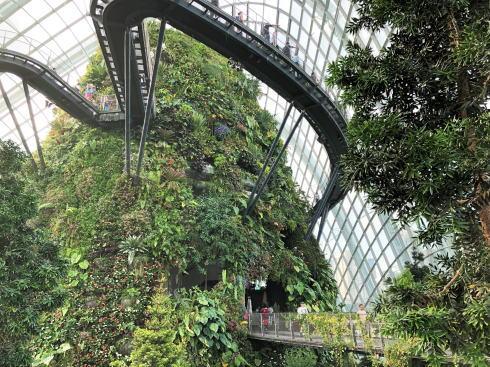シンガポール ガーデンズバイザベイ クラウドフォレスト8