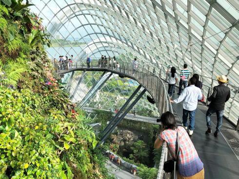 シンガポール ガーデンズバイザベイ クラウドフォレスト6