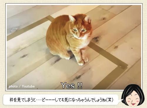 これが猫のサガなのか…ネコを簡単におびき寄せる方法
