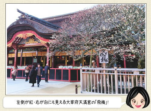 太宰府天満宮、6000本の梅の名所と共に春迎える