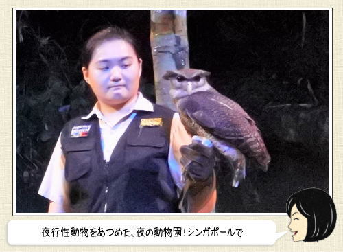 ナイトサファリ、シンガポールの世界初・夜行性動物サファリパーク