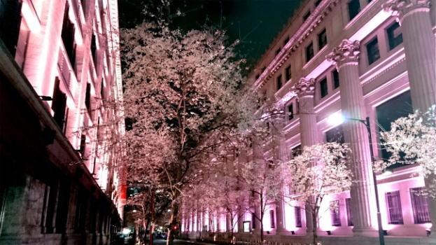 日本橋三越本店が桜色のライトアップ!江戸桜祭り開催