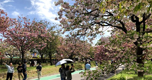 造幣局広島支局「花のまわりみち」花吹雪も