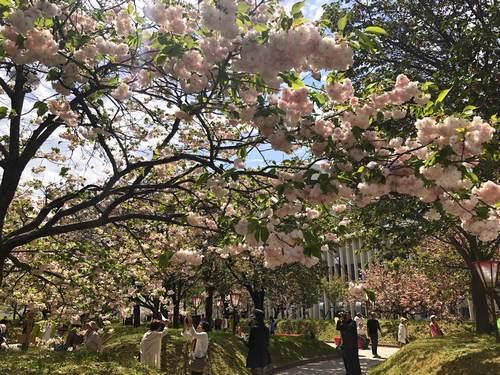 造幣局広島支局 花のまわりみち、2018年の様子