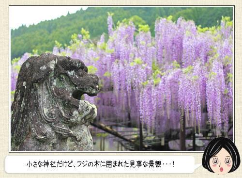 600歳以上の藤棚に守られる社!福岡八女・黒木大藤
